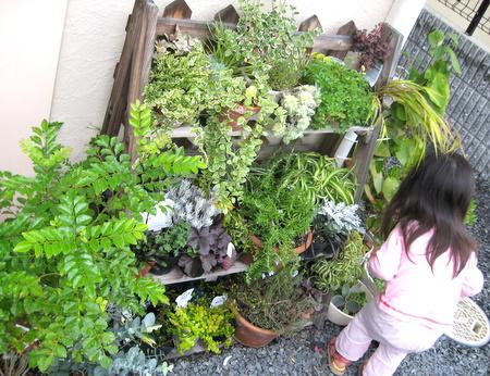 プランタースタンドいっぱいの植物